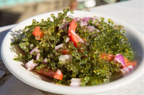 Lato, the strange sea salad - Le Manger - english version