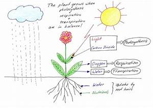 Tell Me Why  Why Do Plants Have Roots