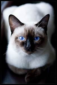 amarna imagens gatos fotografias