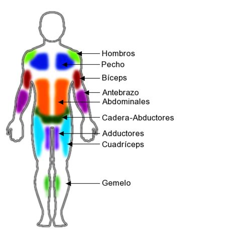 Their main purpose is to help us to move our body parts. Muscle Groups - Body Parts