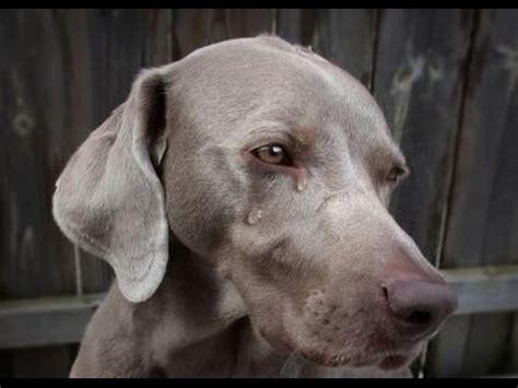 video clip hay sad animals  friend idsowhs xem