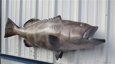 grouper fish mount peixes inch