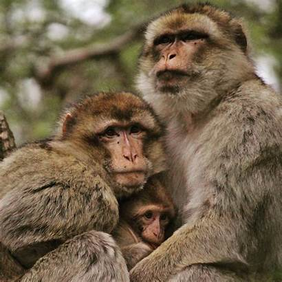 Monkey Nature Wildlife Photographer Reeves Michelle Pexels