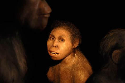 Mystery Hominin Had Sex With Ancestors Of Neanderthals And Denisovans News Flash