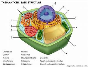 30 Label Cell Structure