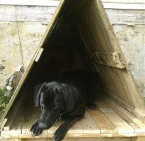Homemade Doghouse fugly pyramid   Home & Garden Do It
