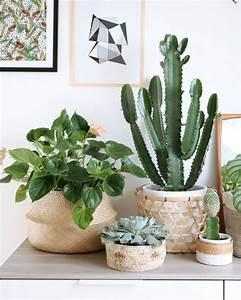 Plante De Salon : d co salon panier deco plante leading inspiration culture lifestyle ~ Teatrodelosmanantiales.com Idées de Décoration