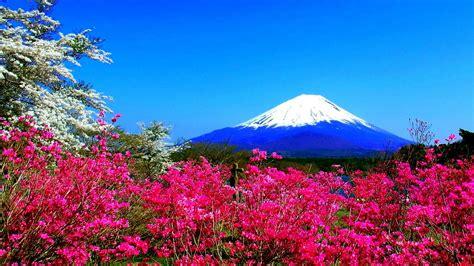 spring mountain flowers japan fuji nature hd wallpaper