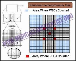 Manual Cells Counting With Hemocytometer  Improved Neubauer