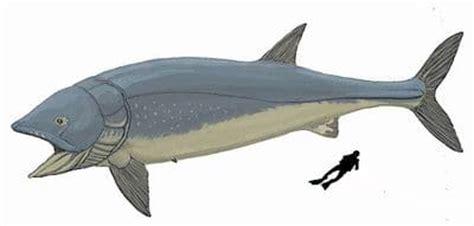 Lived during the middle jurassic period. Leedsichthys, un poisson fossile géant du Mésozoïque de 16 ...