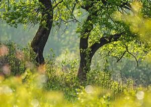 Bäume Für Kübel : b ume forum f r naturfotografen ~ Michelbontemps.com Haus und Dekorationen