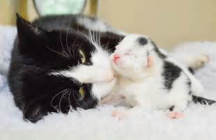 Cats Giving Birth to Kittens
