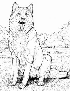 Husky Coloring Pages | Free Printable Coloring Pages for Kids