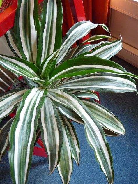 plante depolluante d interieur plante verte d int 233 rieur d 233 polluante images