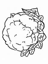 Cauliflower Coloring Pages Lettuce Vegetables Drawing Printable Getcolorings Plants Pag Recommended Getdrawings Adults sketch template