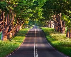 Road, Under, Green, Trees, Wallpaper, 4k