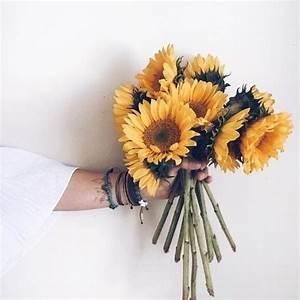 white sunflower | Tumblr