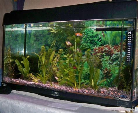 comment mettre des vrais plantes dans un aquarium