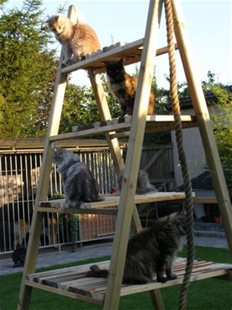 friends outdoor cat climbing frame  meowwwww  pet