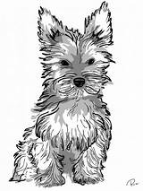 Coloring Dog Yorkie Pages Puppy Adult Realistic Adults Drawing Printable Yorkshire Getdrawings Puppies Teacup Dessins Familyfriendlywork Enregistree Depuis sketch template