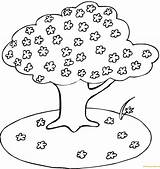 Cherry Tree Blooming Coloring Pages sketch template