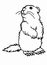 Coloring Woodchuck Pages Groundhog Printables Groundhogs Drawing Animal Colouring Dog Printable Puzzles Crafts Low Printcolorfun Ink Prairie Funny Version sketch template