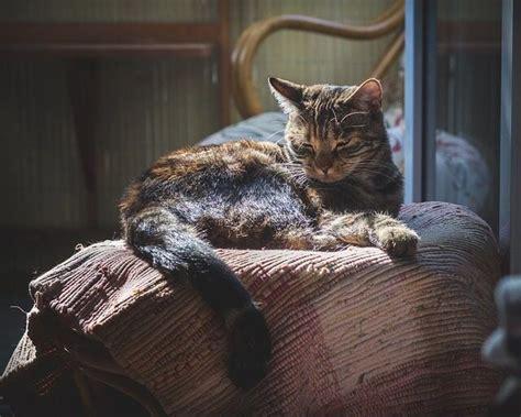 melatonin for cats petsmart