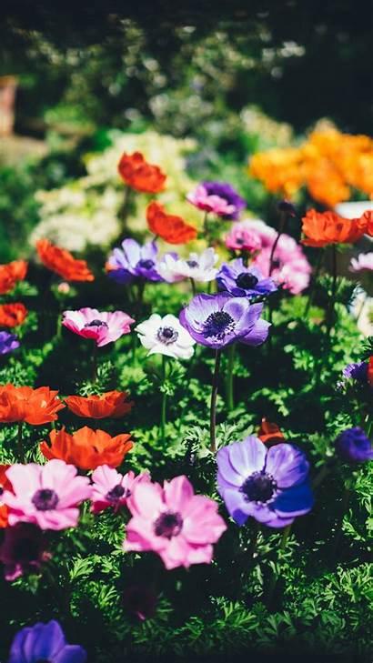 Iphone Spring Botanical Daytime Wallpapers April