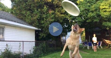 slow motion video   dog failing