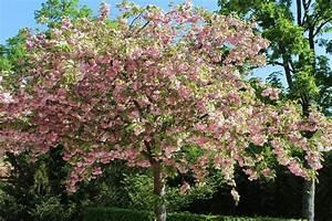 Garten Im Mai : der garten im mai garten wissen ~ Markanthonyermac.com Haus und Dekorationen