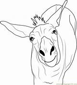 Donkey Coloring Funny Pages Printable Template Cute Coloringpages101 Pdf sketch template