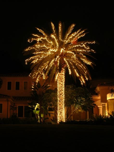 palm tree lights palm trees phillip s world