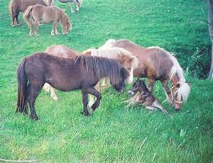 Blueprint Miniature Horse Farm Hamilton, OH