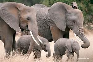 Dismantling Elephant Poaching in Lower Zambezi | African ...