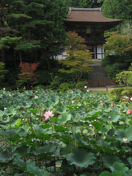 lotus garden thai 65 photos 8 best lotus pond images on lotus flowers
