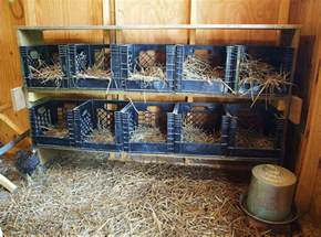 home interior bird cage ohio thoughts building a chicken coop