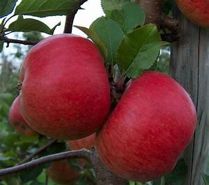Topaz  Apple