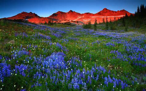 landscape, Nature, Beautiful, Forest, Area, Wild, Sky ...