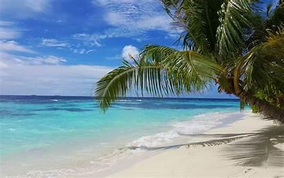 Beach Tropical Palm Trees Sand Maldives Island