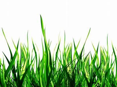 Grass Nature Park Res