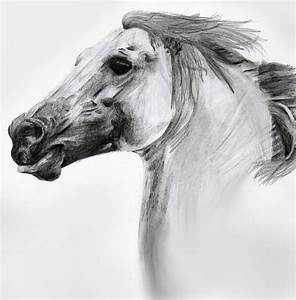 Horse- Pencil Sketch by DoubleVixen on DeviantArt