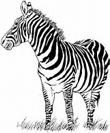 HD Wallpapers Free Zebra Print Coloring Pages
