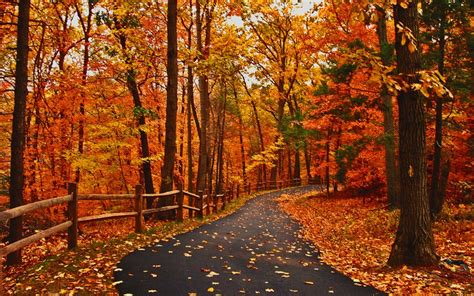 Autumn Roads Wallpapers by Image Result For Autumn Road Hd Wallpaper Autumn In 2019