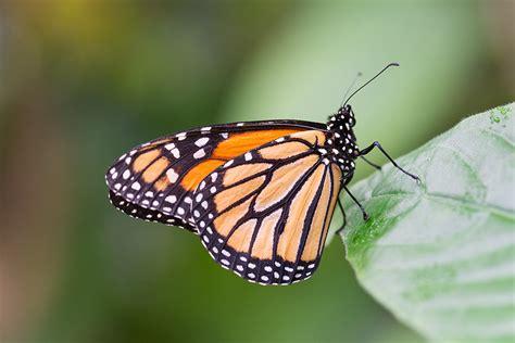 Botanischer Garten Augsburg Schmetterlinge 2017 by Schmetterlinge Im Botanischen Garten Augsburg Aus Licht