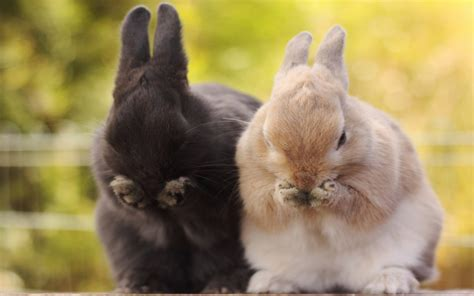 Cute Bunny Pictures Collection For Free Download