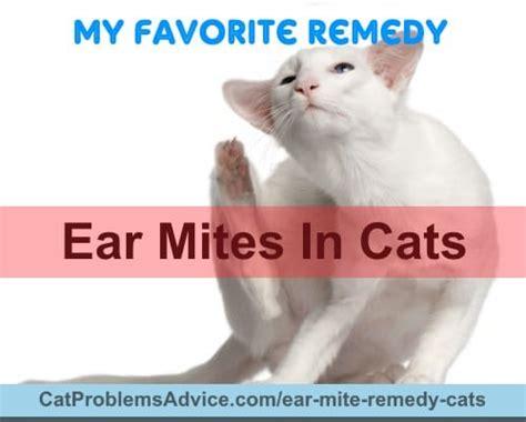 ear mite remedy cats symptoms treatments natural