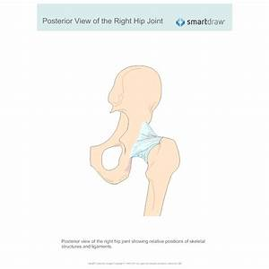 View Of The Right Hip Joint