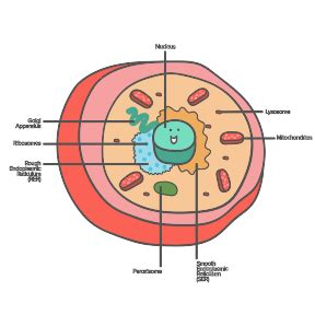 organelles    female egg cell paperwingrvice