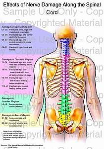 Loading   U0026 39 Effects Of Nerve Damage Along The Spinal Cord