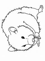 Hamster Kleurplaat Leukekleurplaten Colouring Chomik Kleurplaten Kolorowanka Kleur Coloring Ladnekolorowanki Coloringpage Leuke Een Andere Nu Wydrukuj Kolorowankę sketch template